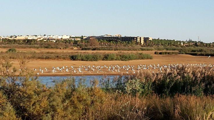 Salgados Nature Reserve #Silves #Algarve #portugal