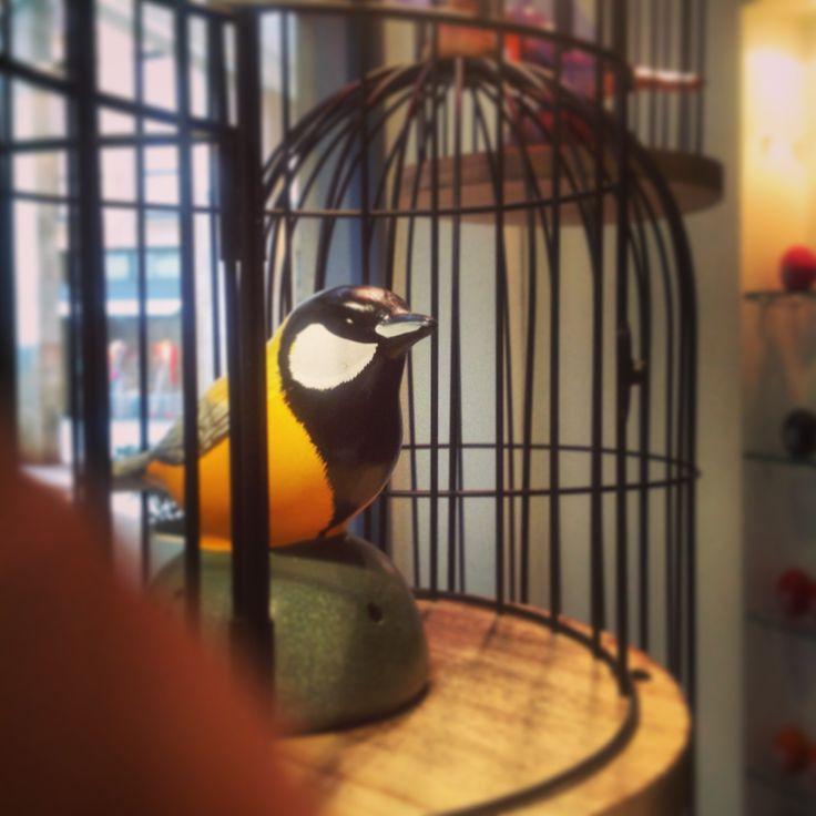 i nostri uccellini sensore
