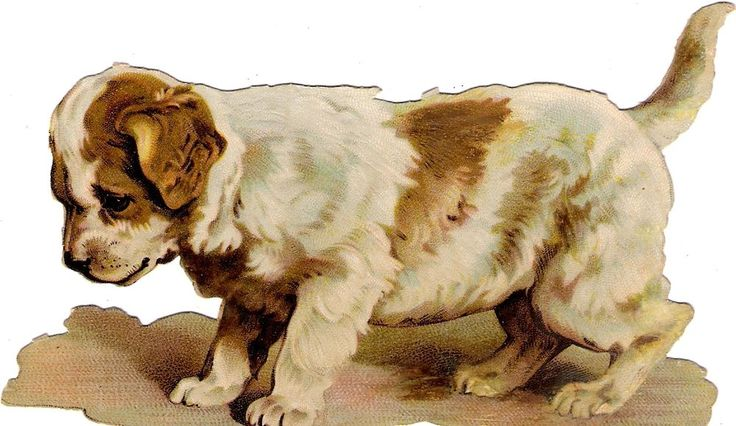 Oblaten Glanzbild scrap die cut chromo Hund dog  14,5 cm chien Welpe puppy