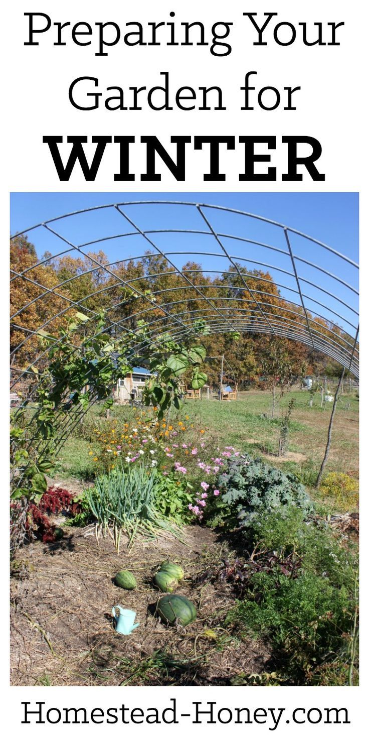 Preparing your garden for winter is quite simple when you follow these five steps: Compost, Cover, Create, Collect, and Celebrate! | Homestead Honey