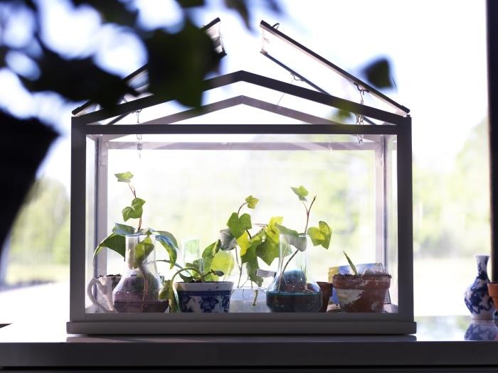 Γεμίστε ένα μικρό θερμοκήπιο SOCKER με μια ποικιλία από μικρά φυτά και βότανα και διακοσμείστε ένα περβάζι παραθύρου.