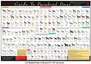 AKC registered breed chart--  I saw this on the wall of a veterinary office .  Too cool!