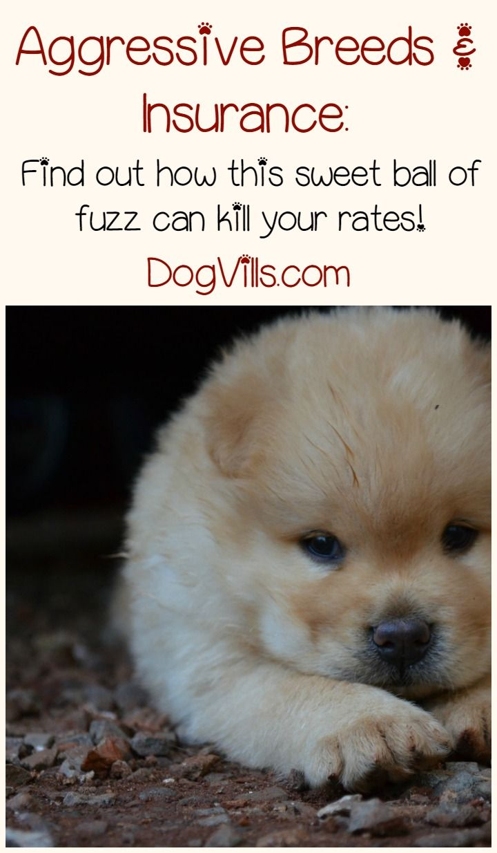 Aggressive Dogs Lists and Your Insurance Rates