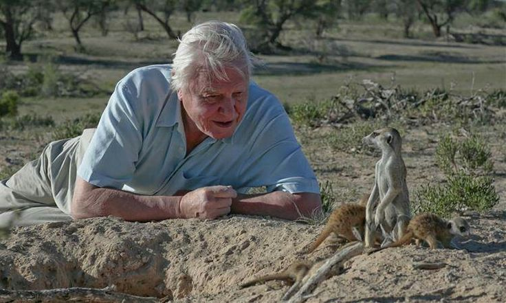 David Attenborough with Meerkats. He really brought truth to nature and animals to the lens of a camera.