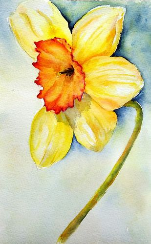 Daffodil, a photo by linfrye . on Flickr. Watercolor Arches 140#CP Snow is gone, spring is 'almost' here,...