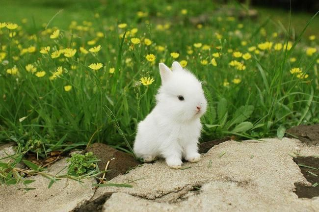 Cute white bunny | we heart it