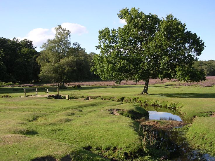 Why not visit #NewForest #Hampshire this #Sunday ?