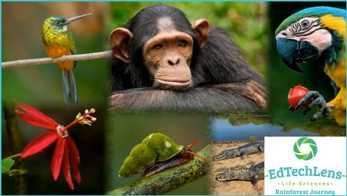 EdTechLens Rainforest Journey Review -http://www.tidbitsofexperience.com/wp-content/uploads/2016/03/Rainforest-Journey-Collage-rectangular-with-logo-Edtechlens-Rainforest-Journey_zps6pmhoq42.jpg http://www.tidbitsofexperience.com/edtechlens-review/