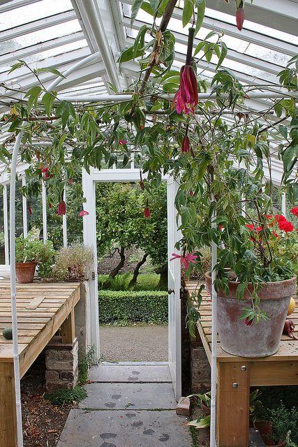Greenhouse in walled garden at Llanerchaeron (NT)