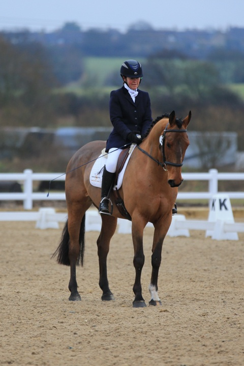 This 16.1hh six-year-old bay #IrishSportHorse gelding could be the #dressage horse for you | For #sale on #HorseDeals