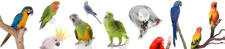 Probably more than you ever really wanted to know about parrots.  They make great pets.