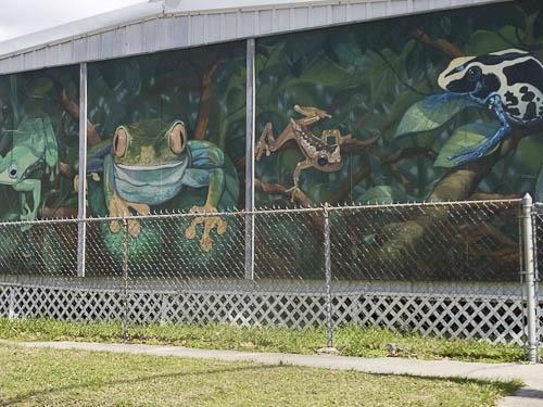 30 best cajun music images on pinterest for Austin frog mural