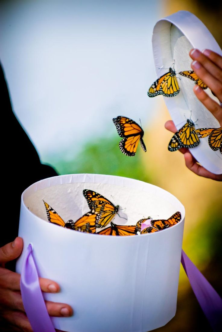 butterflies being released from a box at wedding