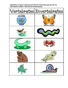 Invertebrate and Vertebrate Picture Sort