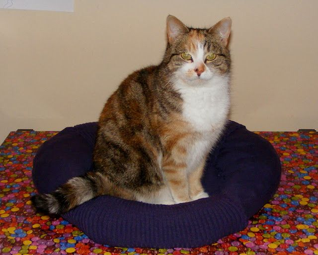 Elizabeth's Kitchen Diary: Upcycled Sweater: Cat Bed