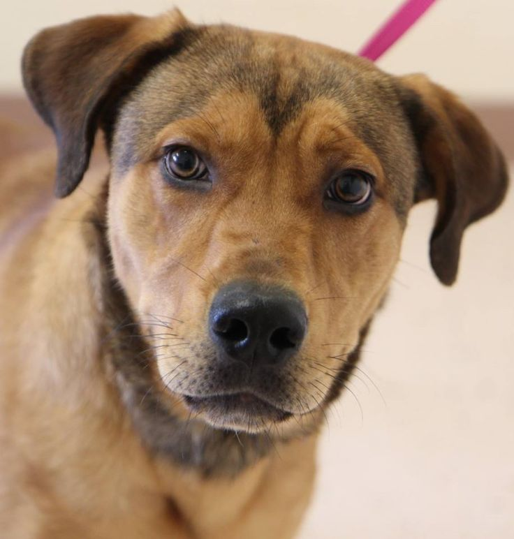 Animal Shelter Dog Urgent Needs Out by Monday