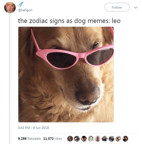 The 12 Astrology Zodiac Signs As Dog Memes Funny Animals Daily Lol Pics Zodiac Signs Funny Zodiac Memes Zodiac