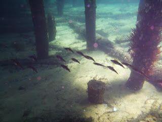 Alisa Chalklen: Calamari - Why Is It Good For Us?