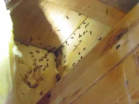 6266578787 Call Todaybest Ant Exterminator Pest Pasadena Ca Pest Control Pasadena Ca