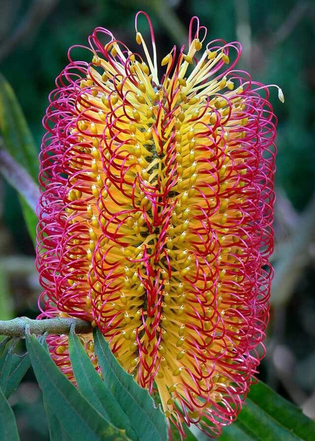 incredible plants