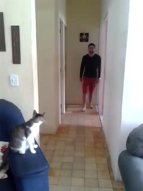 High Five Cat. #Katzen #Katzenliebhaber #Lustige #Katzen   – Cats