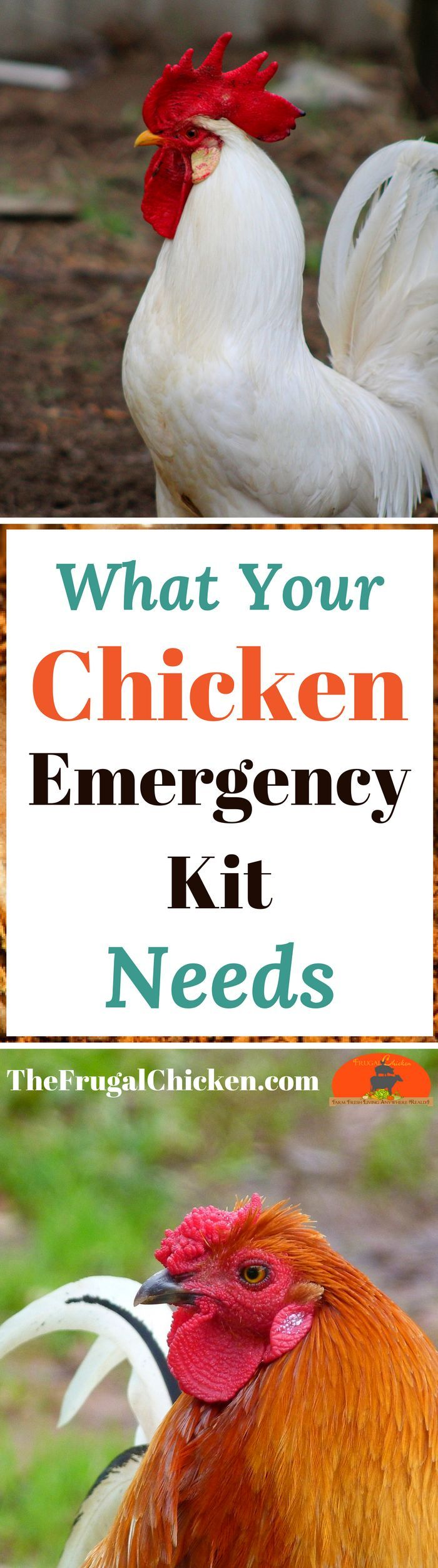 If you have chickens, eventually they will need first aid! Here's the items you should ALWAYS have in your backyard chicken emergency kit!