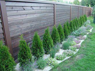 5 причин выращивания туи в качестве зеленого забора:1) растение хорошо стрижется, поэтому можно придать любую форму;2) туя совершенно неприхотлива, единственное требование - достаточное количество вод…