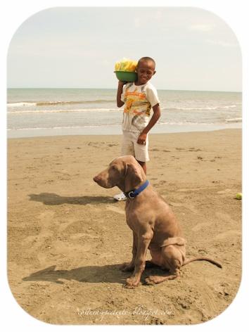 Estudios de la cotidianidad: Niños que trabajan /Working children By Saia Vergara #Weimaraner #Dogs #Perros