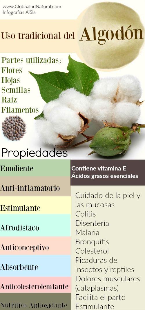 Algodón la Planta que Cuida y Protege La Piel y los Bronquios - Club Salud Natural