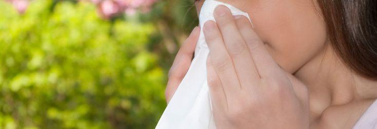 Senná rýma - pro stále větší část lidské populace je jaro období, spojené s objevením se příznaků senné rýmy – ucpaný nos, svědění v nose, kýchání, vodnatá sekrece z nosu. Senná rýma, neboli sezónní alergická rýma, je způsobená alergií na pyly – např. bříza, pelyněk, trávy.