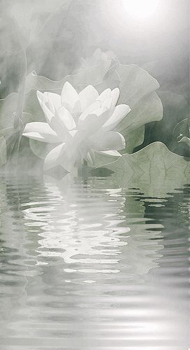White Lotus Flower Reflections - by Bahman Farzad, via Flickr