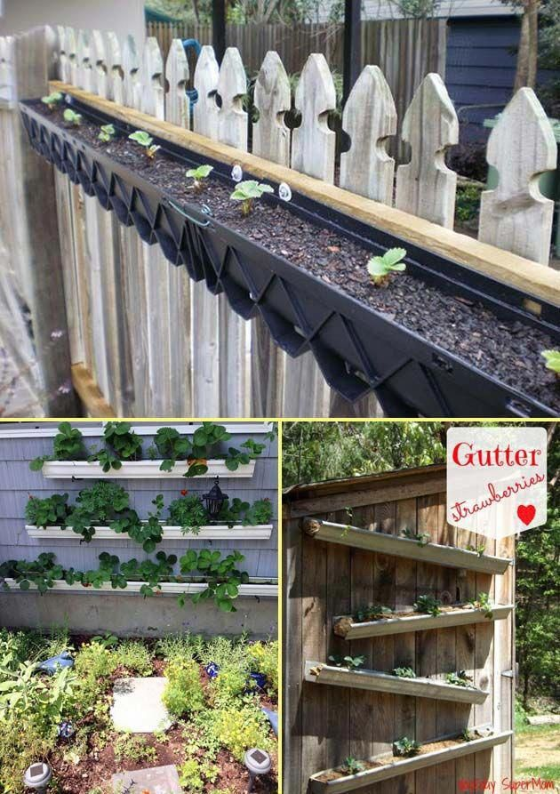 Planting Them Up Off The Ground In Rain Gutters Can Keep Them Clean As Well As Saving Much Space Pallets Garden Growing Strawberries Strawberry Plants
