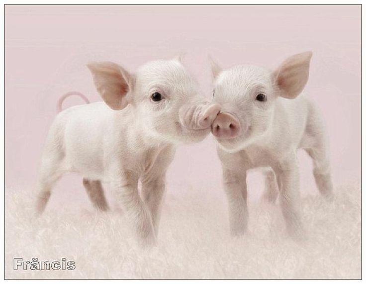http://fmlkunst.home.xs4all.nl/varkenskaarten1/varkenskaarten1.htm - lief
