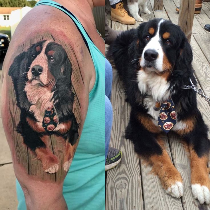 Bernese mountain dog tattoo by Helix tattoo lodge in Rising Sun maryland