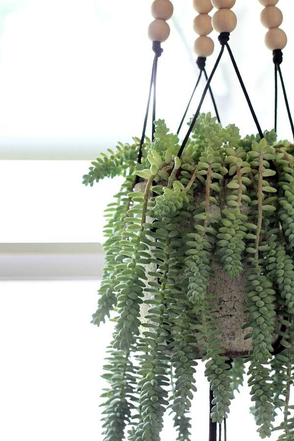 26 best non toxic house plants