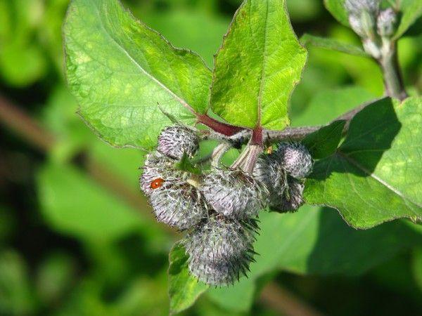 season floras-ladybug.. by Heli Aarniranta on ARTwanted