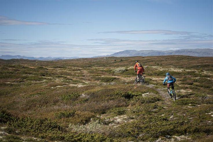 Spennende utfordringer i vakker natur, enten du velger en høyfjellstur eller en av de sentrumsnære sykkelrutene. En rekke turforslag for stisykling og sykling på idylliske grusveier på fjellet er tracket. Disse finner du på www.trailguide.no (privat uoffisiell nettside). Se også turtips i boken Terrengsykling i Norge. Nye tilrettelagte stier vil bli etablert i tiden fremover som et resultat av den store terrengsykkelsatsingen i både Ål og Hallingdal (Tråkk'n Roll). Utforsykling kan du prø...