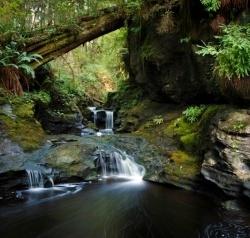 Typical Juan de Fuca Scenery - Rainforest Tours