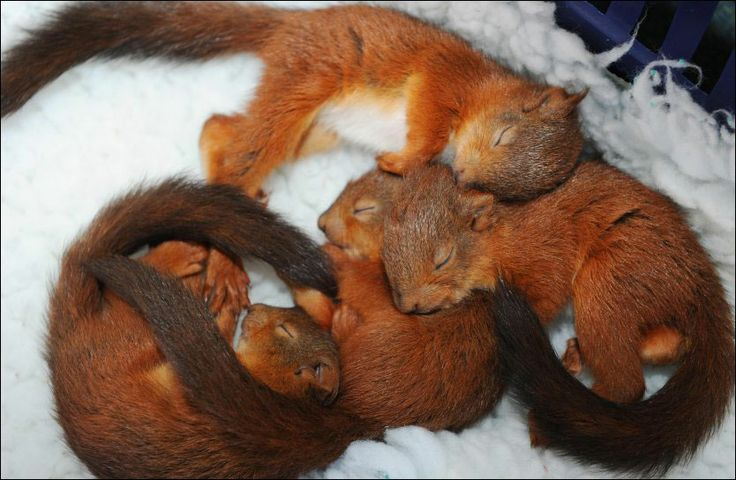 Aaawwwww.... Squirrel babies
