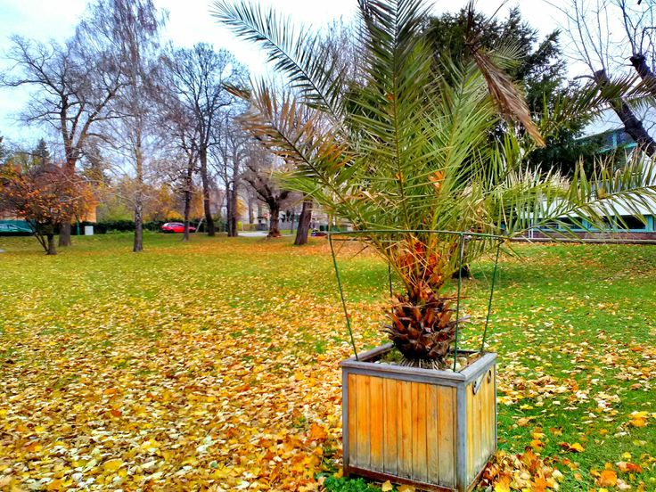 Autumn palmtree