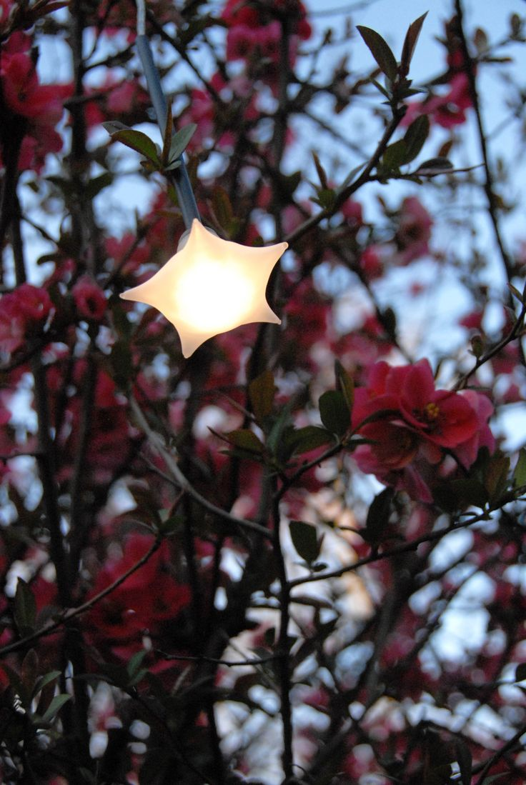 Can you see the stars even if its cloudy? Star shaped LED lighting fixture. Caramella Stella - Design Pepe Tanzi.