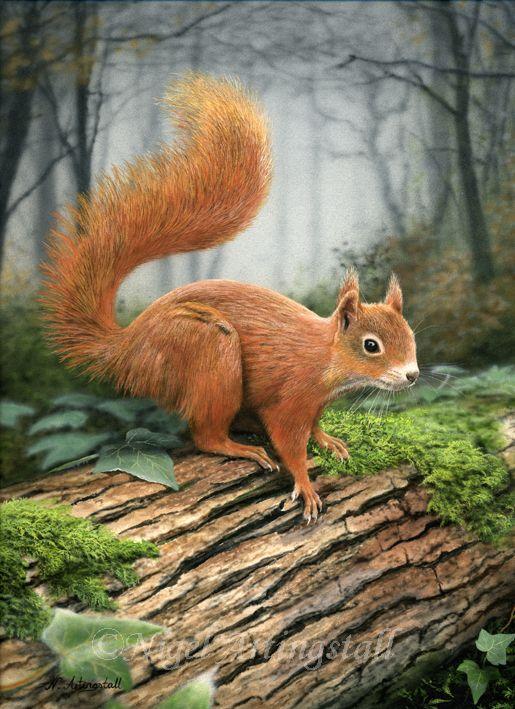 Red Squirrel (Sold) | Gallery | Wildlife Artist Nigel Artingstall