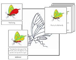 "Free butterfly part-of cards with definitions from Montessori For Learning - must ""like"" their Facebook page for access"