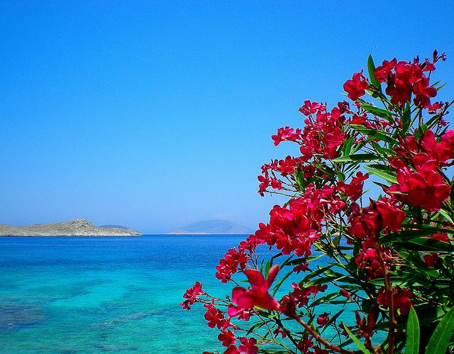 in flying colors -- Chalki Island
