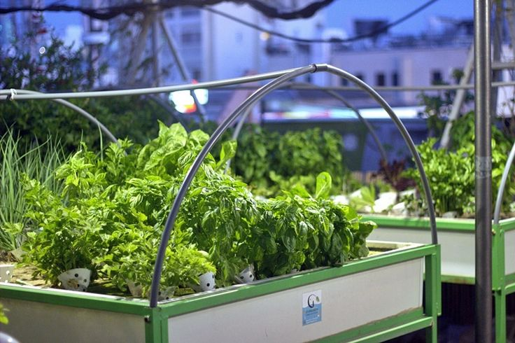 Green in the city hydroponic gardening http://livingreen.co.il/en/urban-farming-israel-en/