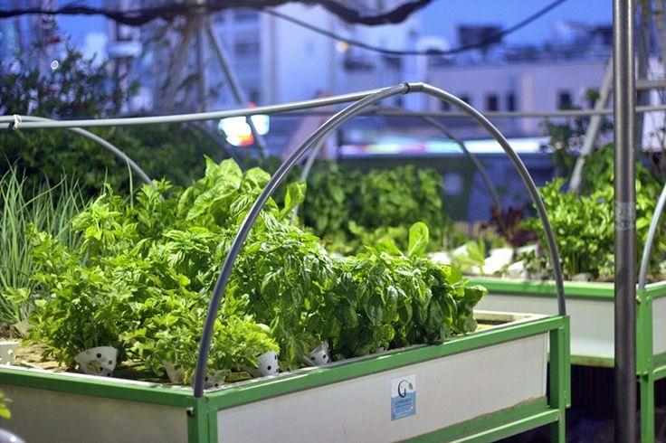 Green in the city hydroponic gardening http://livingreen.co.il/en/urban-farming-israel-en/