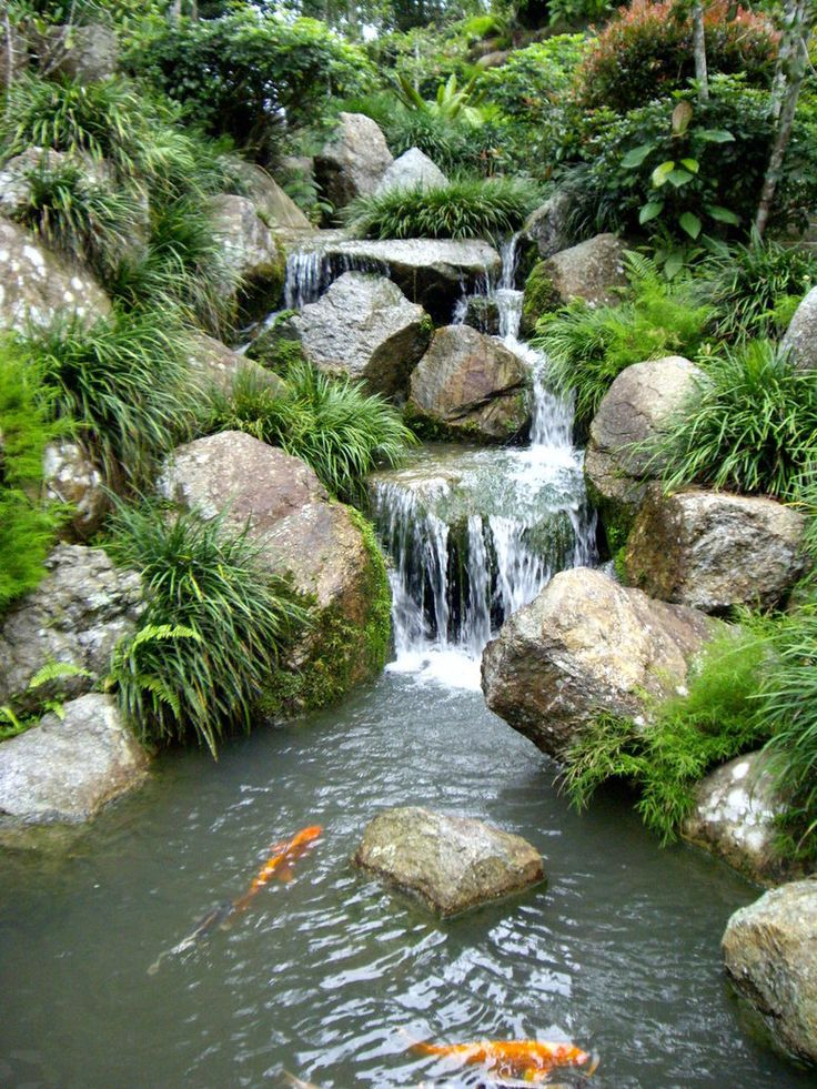 10 best images about koi ponds on pinterest gardens for Koi pond waterfall