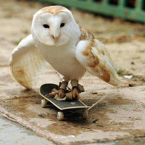 Ave aprende a patinar