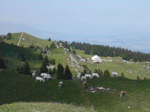 """Résultat de recherche d'images pour """"chalet du mont tendre vaud suisse"""""""