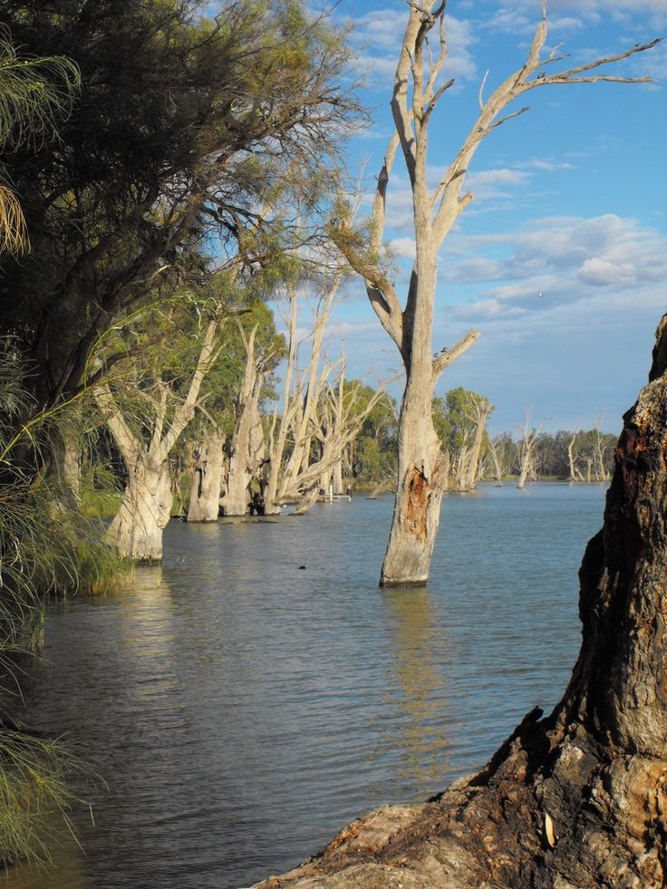 Another view of the Mighty Murray River. This was taken in Gol Gol NSW, Australia. (Copyright to Lisa J Pownall 2013).